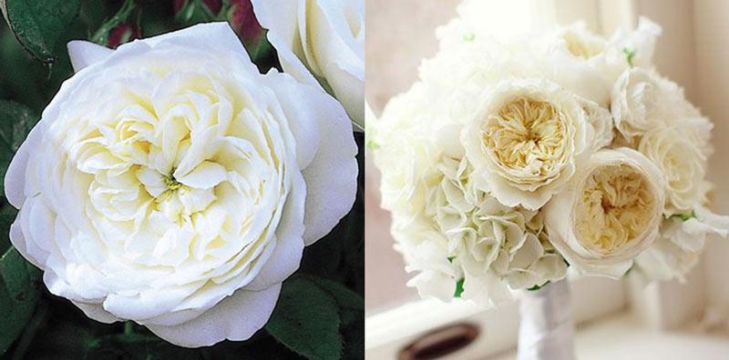svadebniy-buket-iz-angliyskih-roz-i-orhidey-foto-gde-kupit-buket-iz-giprokas