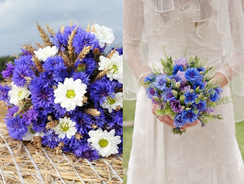 d0ab345a0416ab4 Они впечатляют оригинальностью окраски и богатой игрой оттенков. Свадебный  букет из синих роз светлых тонов впишется практически в ...